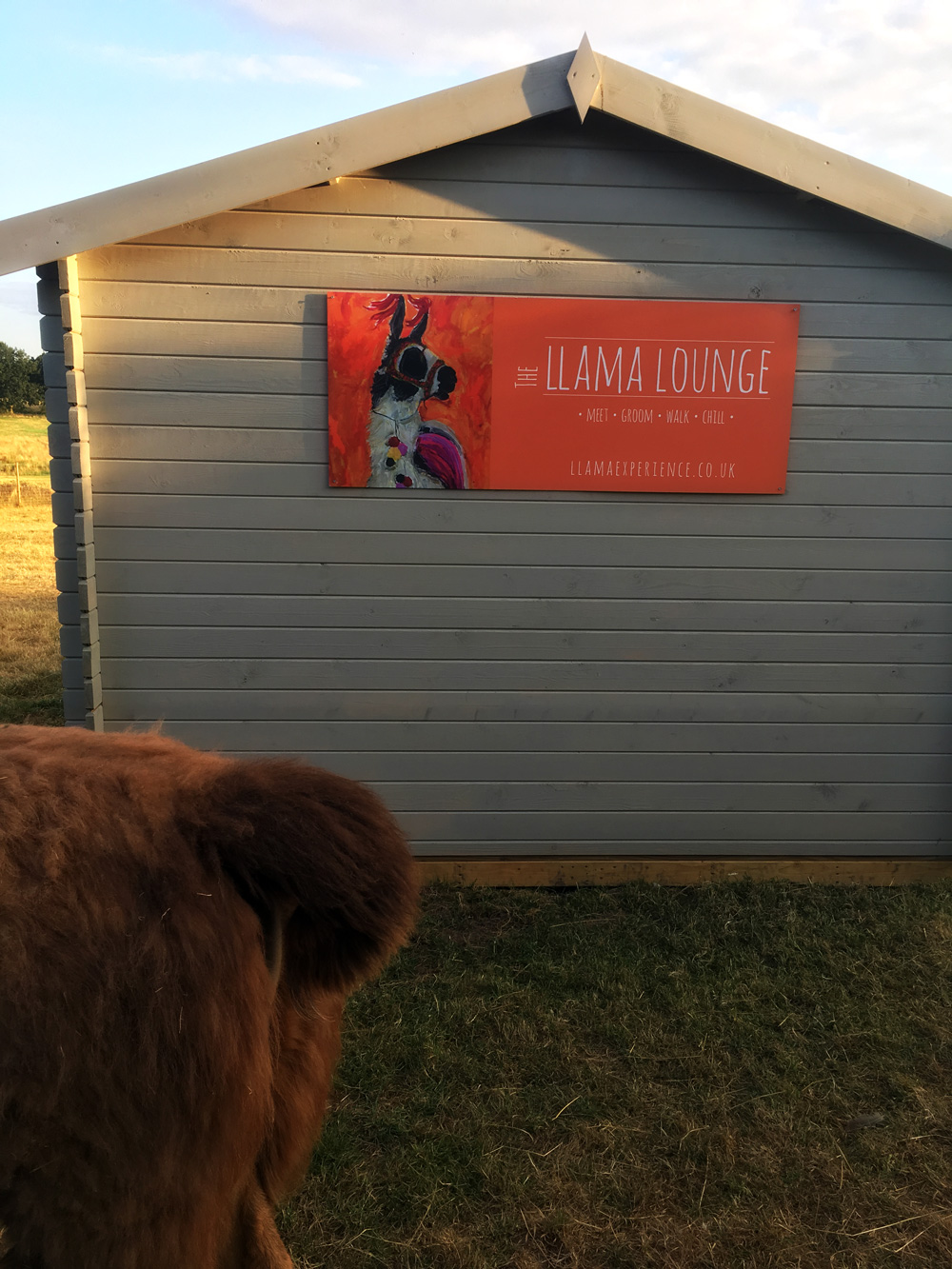 Welcome to the LLama Lounge - The LLama Experience