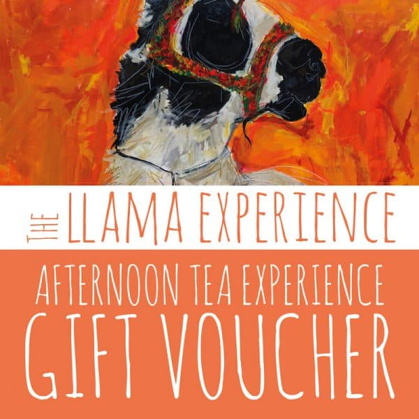 Gift Voucher for Llama Walk & Afternoon Tea Experience - The Llama Experience