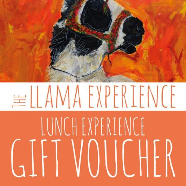 Gift Voucher for Llama Walk and Lunch Experience - The Llama Experience
