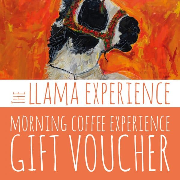 Llama Walk & Morning Coffee Gift Voucher Experience - The Llama Experience