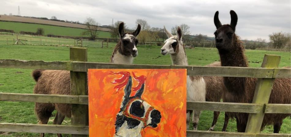Introduction to Llamas - The Llama Experience