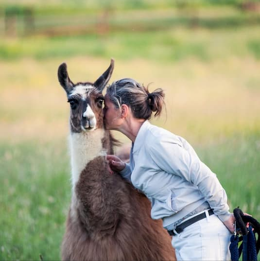 About the LLama Experience